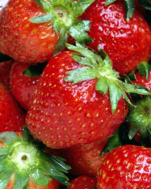 Luscious strawberries grown using hydroponics!