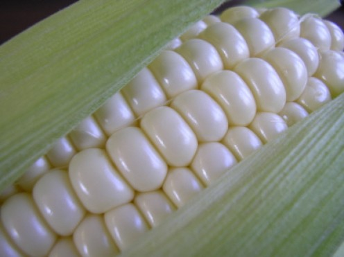 Fresh sweet corn - ready for the grill (image from jspatchwork on Flickr)