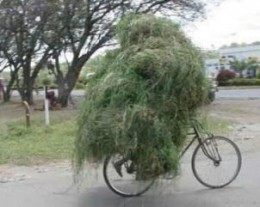 Grass- perhaps not as much as he is carrying on his bike!