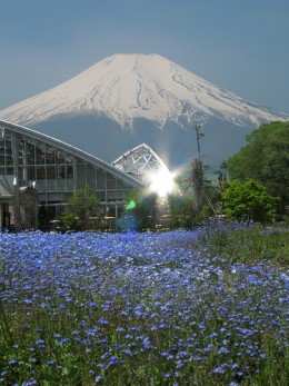 Mount Fuji, an active Stratovolcano in Japan