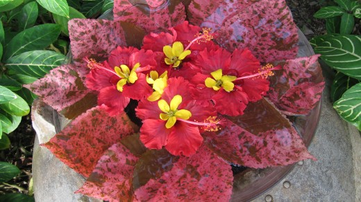 Pangkor Laut fresh flowers. Photo by Yean Xin