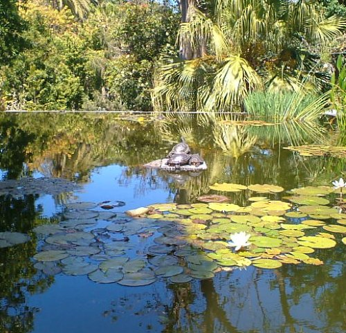 Lily pools in Puerto de la Cruz