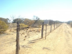 See the Rabbit proof fence on a day out