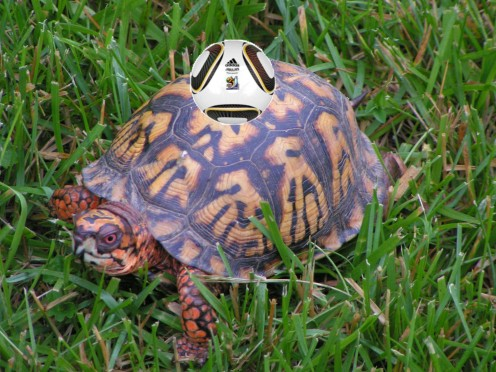 Box Turtle demonstrates nonpareil ball handling skillz. Bicycle kick may be problematic.