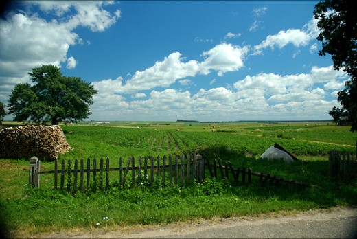 Field in Kozlovichi, Belarus