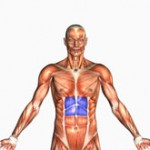 Human Anatomy - Upper Abdominal s Highlighted in Bluee