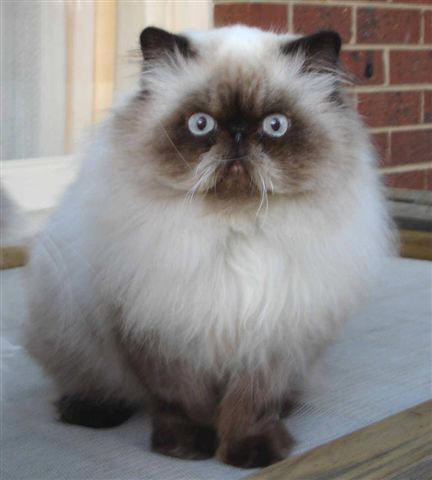 Read all about the Ghost Cat of St Augustine.