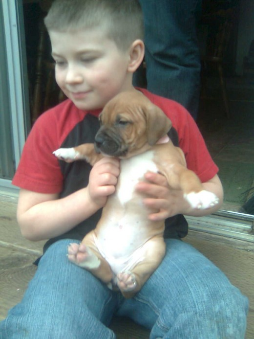 Puppies and Children Will grow bigger - keep size in mind!