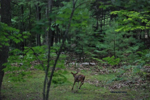 The fawns tended to move quickly and often.