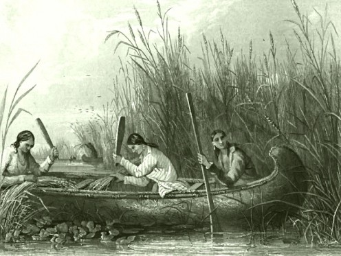Harvesting Wild Rice in 19th Century American rivers.