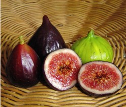 ISRAEL: SEVEN SPECIES (4) FIGS