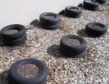 Tires set up for growing potatoes.
