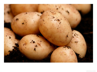 Fresh Grown Potatoes. There is nothing in the world that tastes as good as homegrown potatoes freshly harvested from the garden.