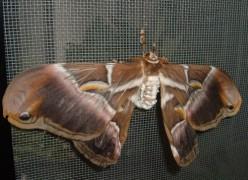 Visit the Tenerife Mariposario del Drago butterfly gardens of Icod de los Vinos
