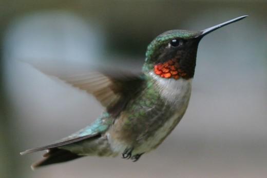 (10000birds.com)