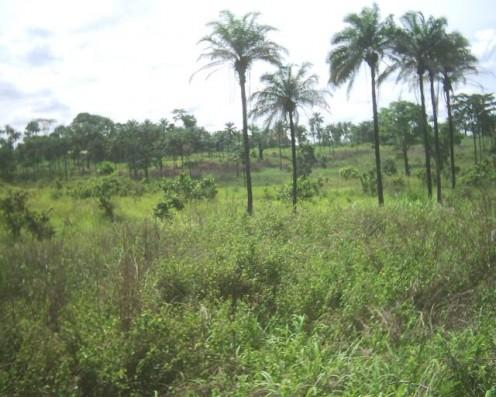Landscape in Bas-Congo, July 2005.