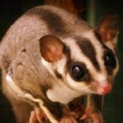 Tibutabu profile image