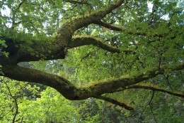 Welcoming Tree