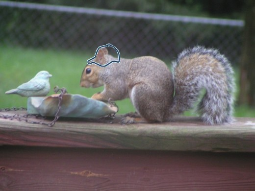 Satisfied Squirrel enjoys a snack and a Silly Bandz