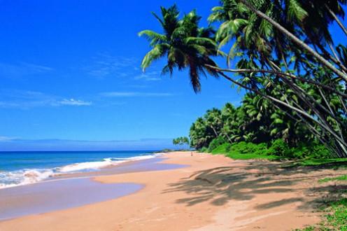 Sri Lanka Mirissa Beach