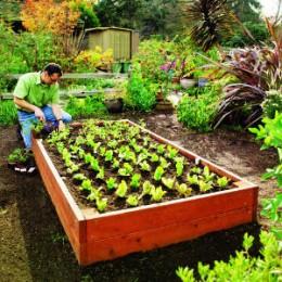 wooden raised bed garden
