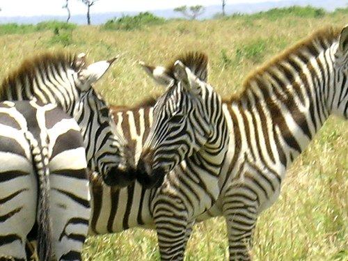 Photo Courtesy of Kenya Travel ideas