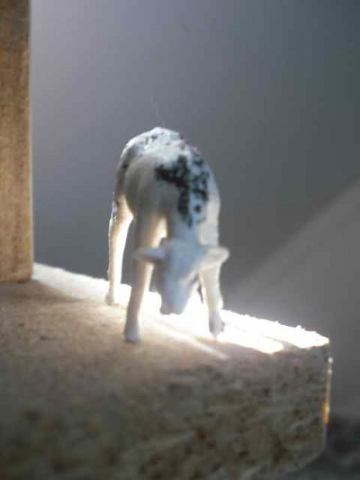 Back lit goat . . . I like it!