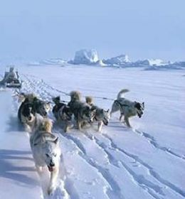 Eastern arctic-style fan-rigged dog team harness