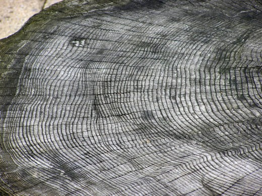 It takes a trained eye to read tree rings and analyze the climactic cycles.