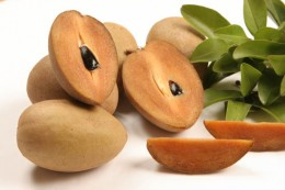 The Sapodilla is a favored fruit in the Caribbean