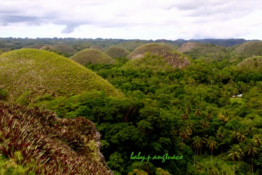 View of chocolate hills from the view deck atop one of the hills