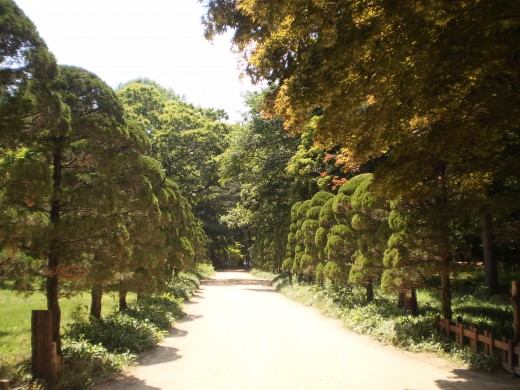 One of the many lanes on Nami Island lined by trees.