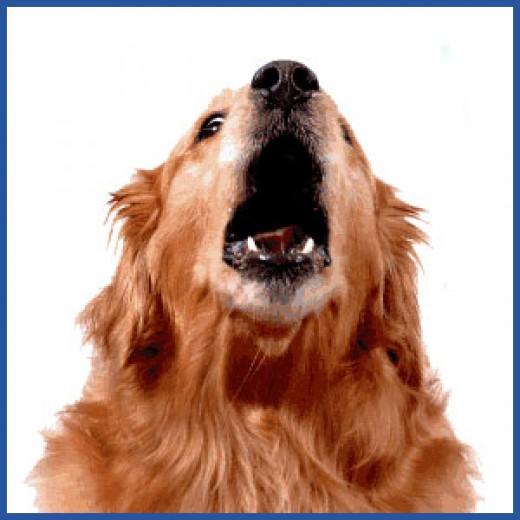Bark Off Dog Silencer