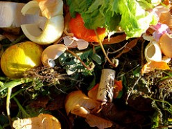 What You Should and Should Not Compost