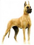 Great Dane with cropped ears