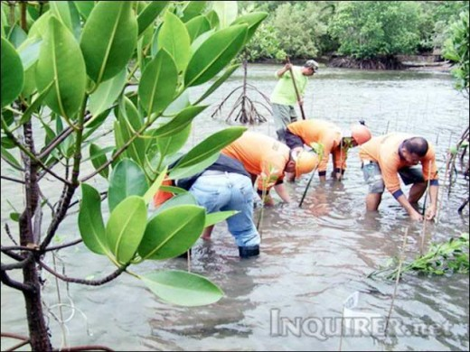 coastal ecosystem devastated