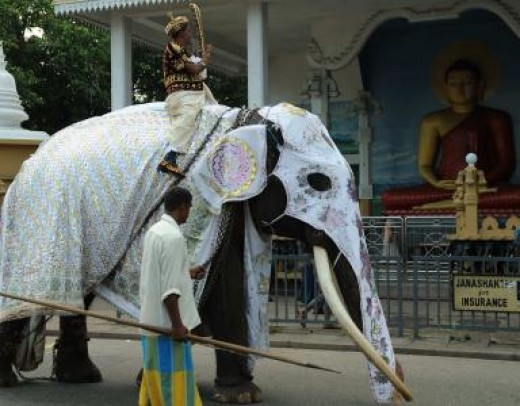 Elephant ride at Sri Lanka