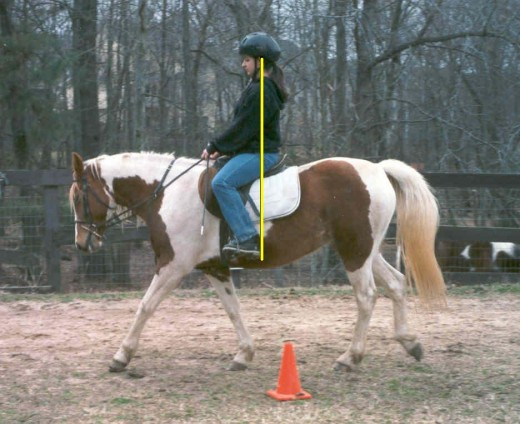 Drop an imaginary plumb line from the ear and it should go through the hip joint and to the back of the rider's heel.