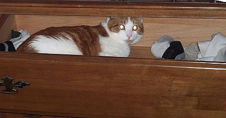 cats love to sleep in dresser drawers