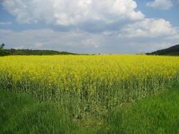 Biofuel field.