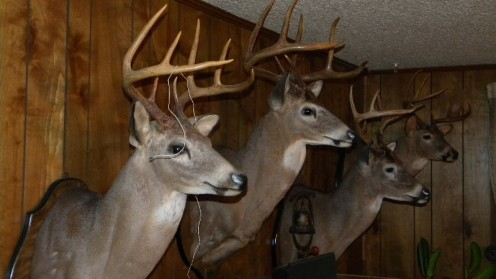 Wall to wall trophy bucks!