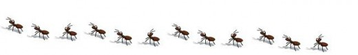 How to get rid of ants naturally without using any toxic substances, Seekyt
