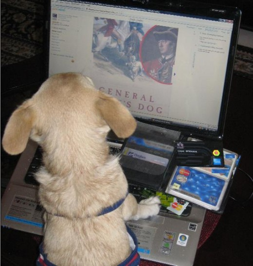 Computers have become so user friendly that even a chihuahua can order things online.