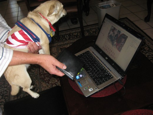 Like a naughty child, our chihuahua is denied access to the computer.