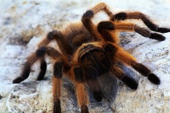 Arachnophobia-How to Conquer Your Fear