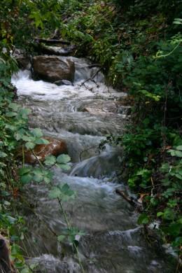 Roadside Creek