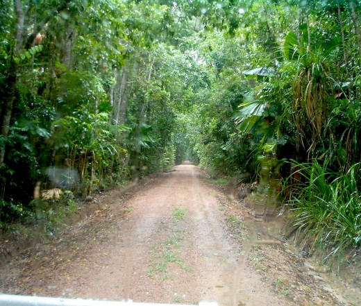 The Jungle Lane of No return