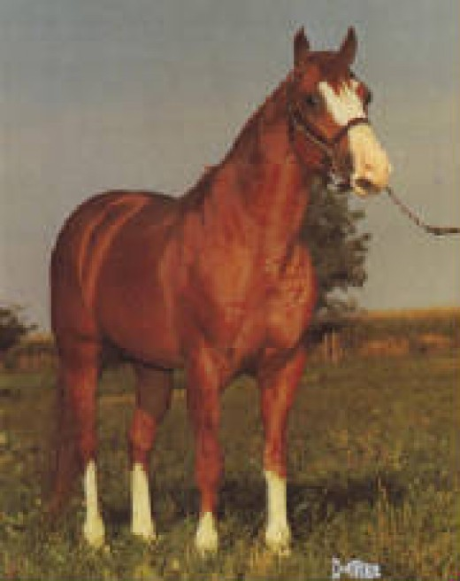 The immortal Mr Gun Smoke 1961 sorrel AQHA stallion