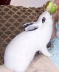 How to Protect Furniture from Pet Rabbits' Chewing: Keep Bunnies from Chewing Furniture Corners