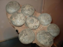 Dinosaur eggs in india